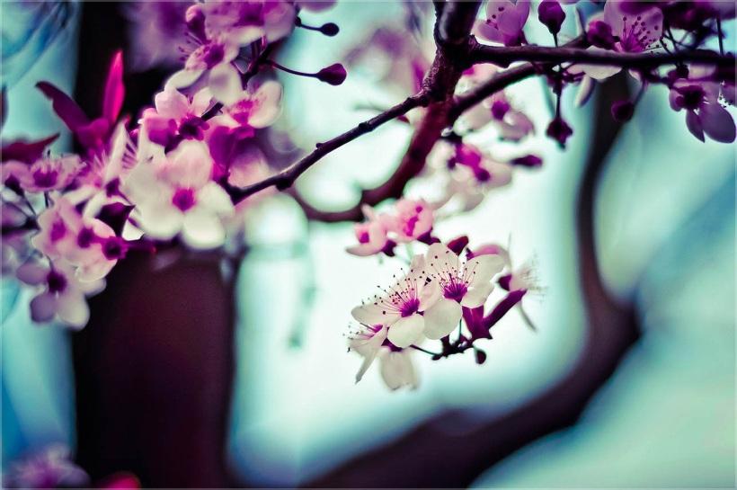 nature-flowers-plant-blur